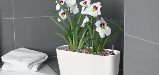 Self watering plants