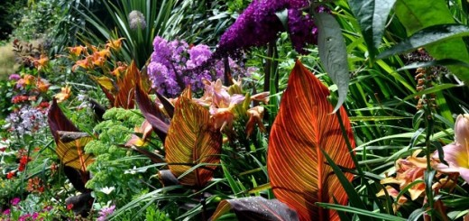 plants online Australia