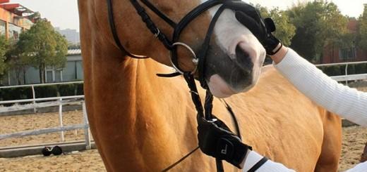 online-horse-supplies
