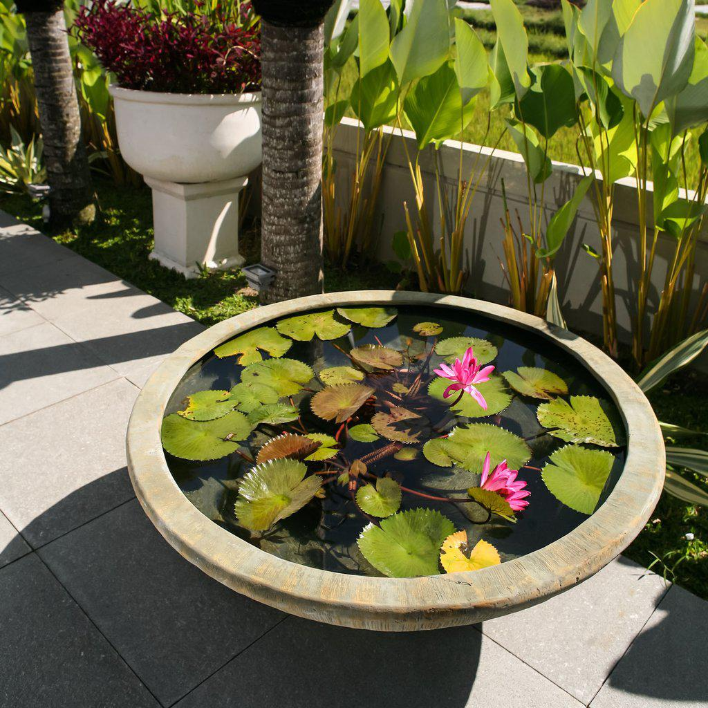 How to create an oasis in a water plant bowl available for Planter fish pond
