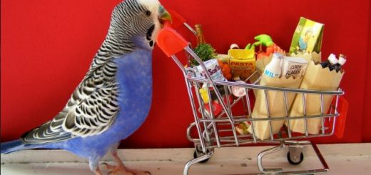 bird-supplies