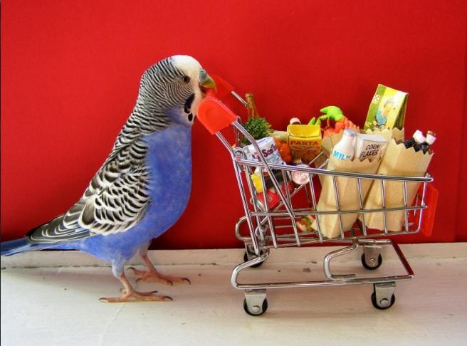 bird-supplies