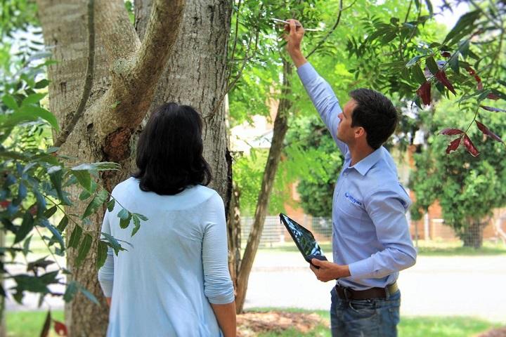 arborist consulting services