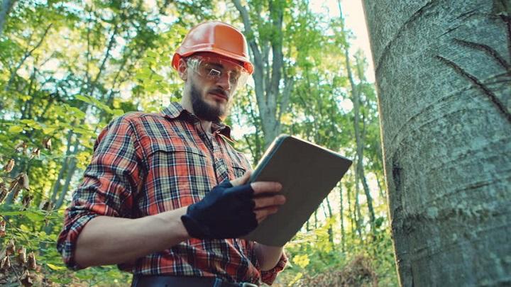 man doing  arborist tree report
