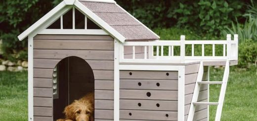 dog laying inside his house